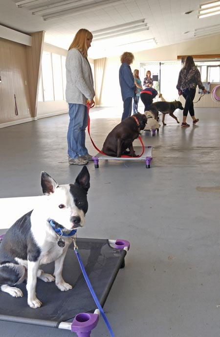 Training class at Flying Colors Canine Academy