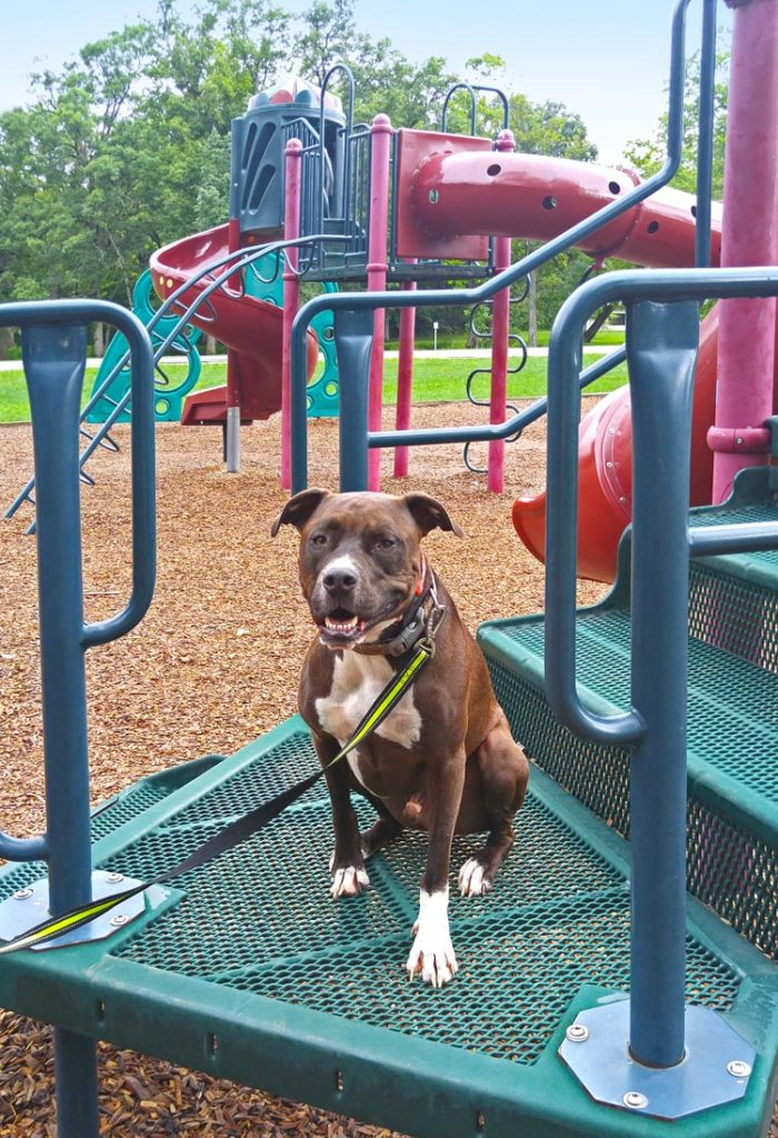 Dog sits in place on playground