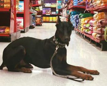 Fort Wayne's Dog Friendly Stores