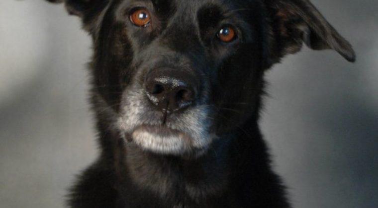 Dog Myth Debunked – Abuse